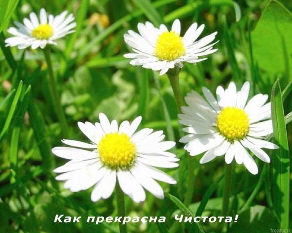 Лекарственные травы :: Рецепты, травы, лекарственные травы купить.
